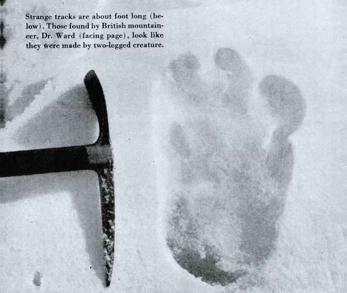 koca ayagin ayak izleri