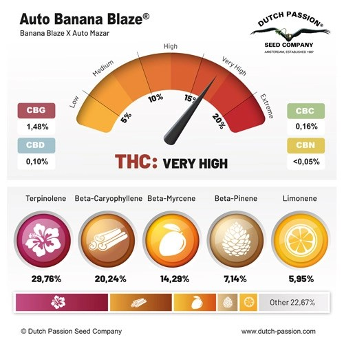 Auto Banana Blaze terpenes and cannabinoids
