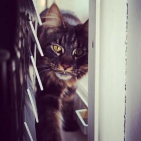 Katten oppas_2