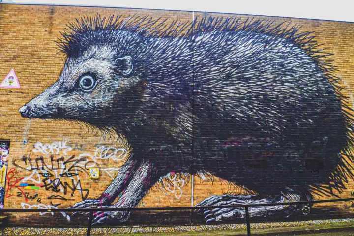 ROA street art of a giant hedgehog on Ebon Street surrounded by graffiti tags