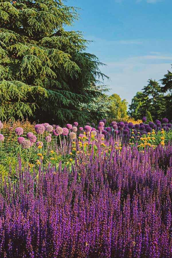 Wild flowers in Kew Gardens, London