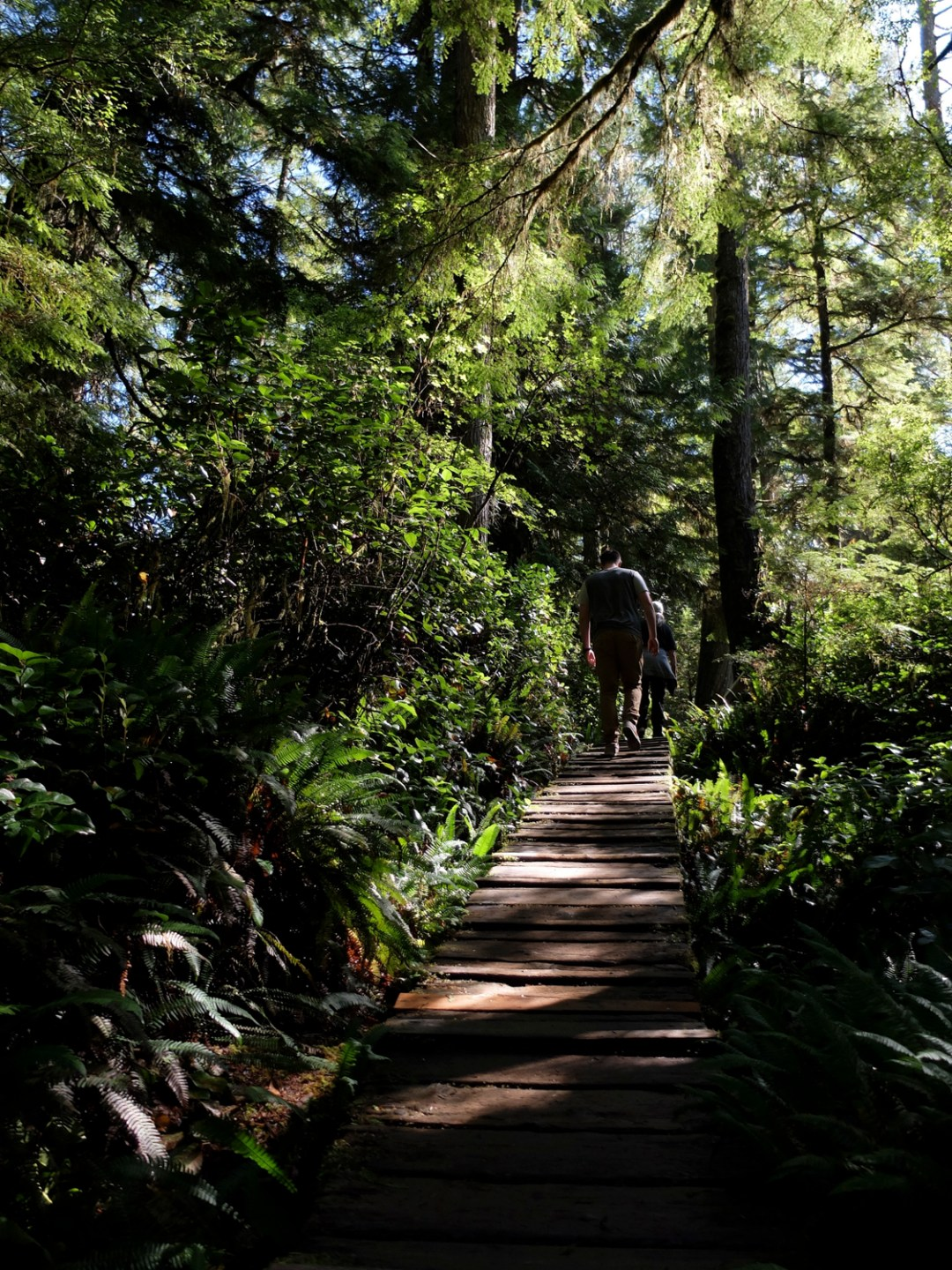 Tofino Rainforest Trail | Dutchie Love
