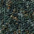 Mantis-03302-(112px)
