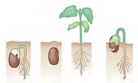 Latihan Soal Sistem Reproduksi Tumbuhan dan Hewan IPA SMP MTs K13