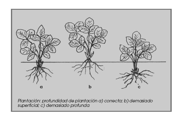 Guía completa del cultivo de las fresas