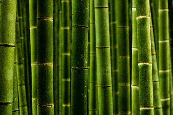 Двери из бамбука