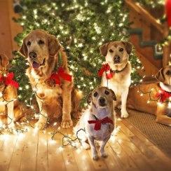 С Новым 2018 годом желтой собаки и Рождеством