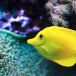 saltwater-fish.jpg