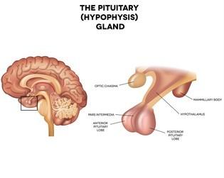 Ways to Stimulate Pituitary Gland