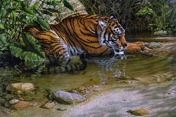 Tiger with Jungle Animal Image