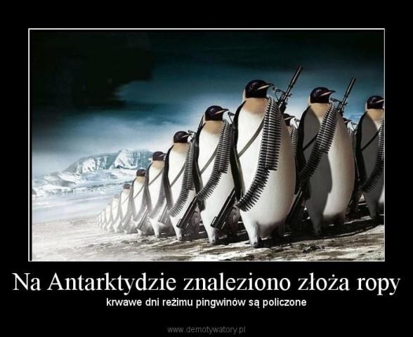 rezim_pingwinów