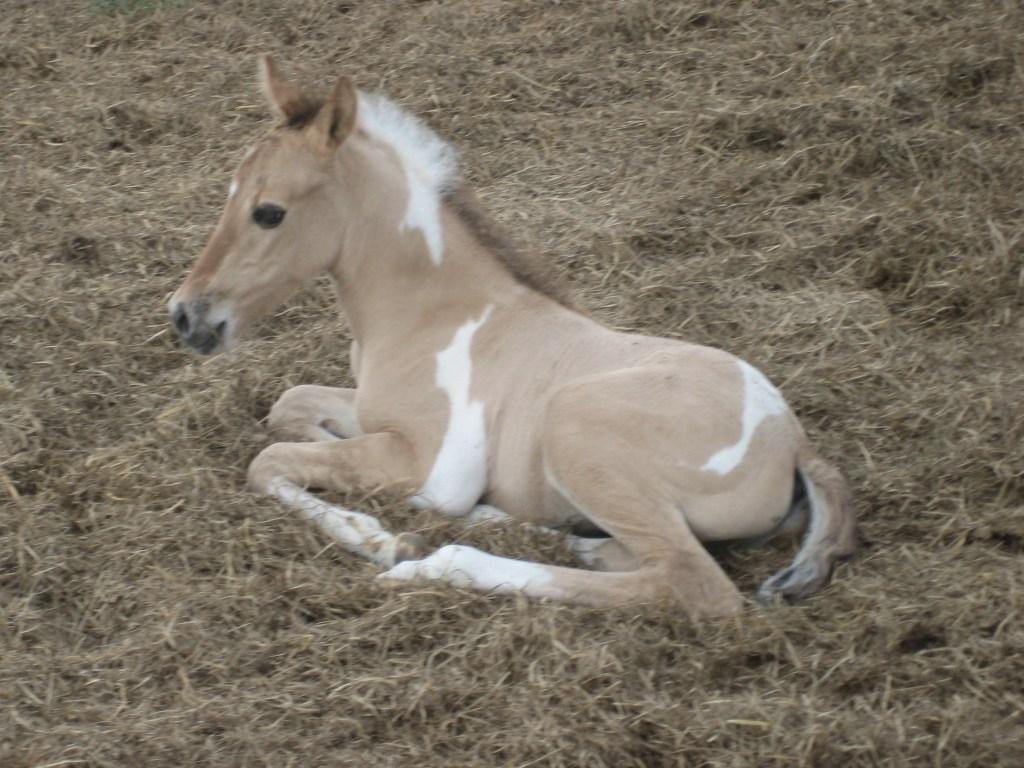 Horses – 8
