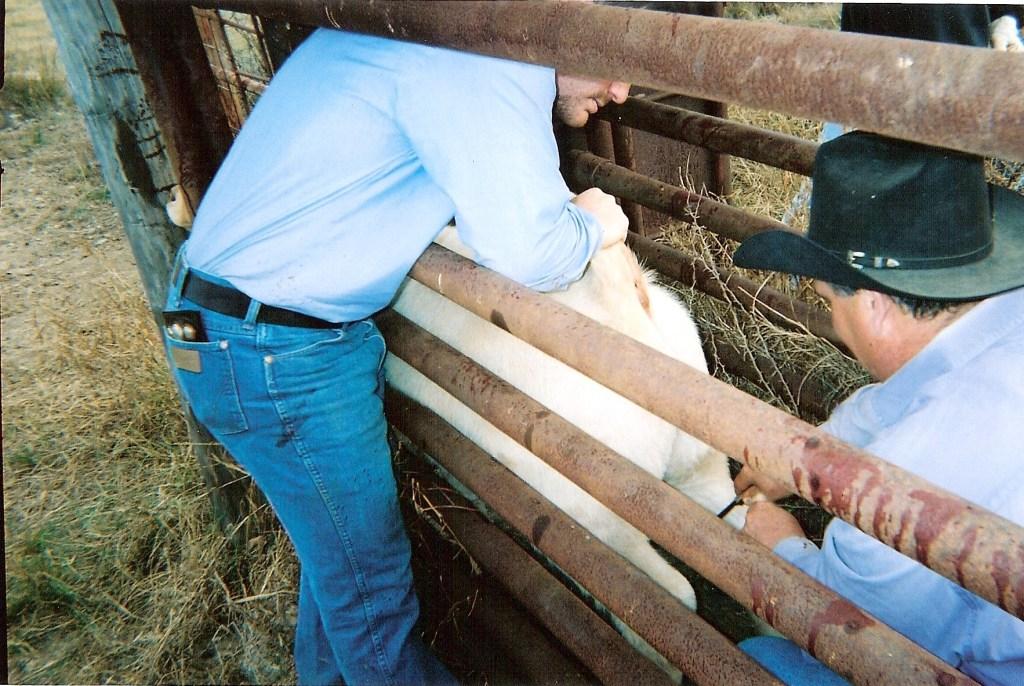 Ranch0003