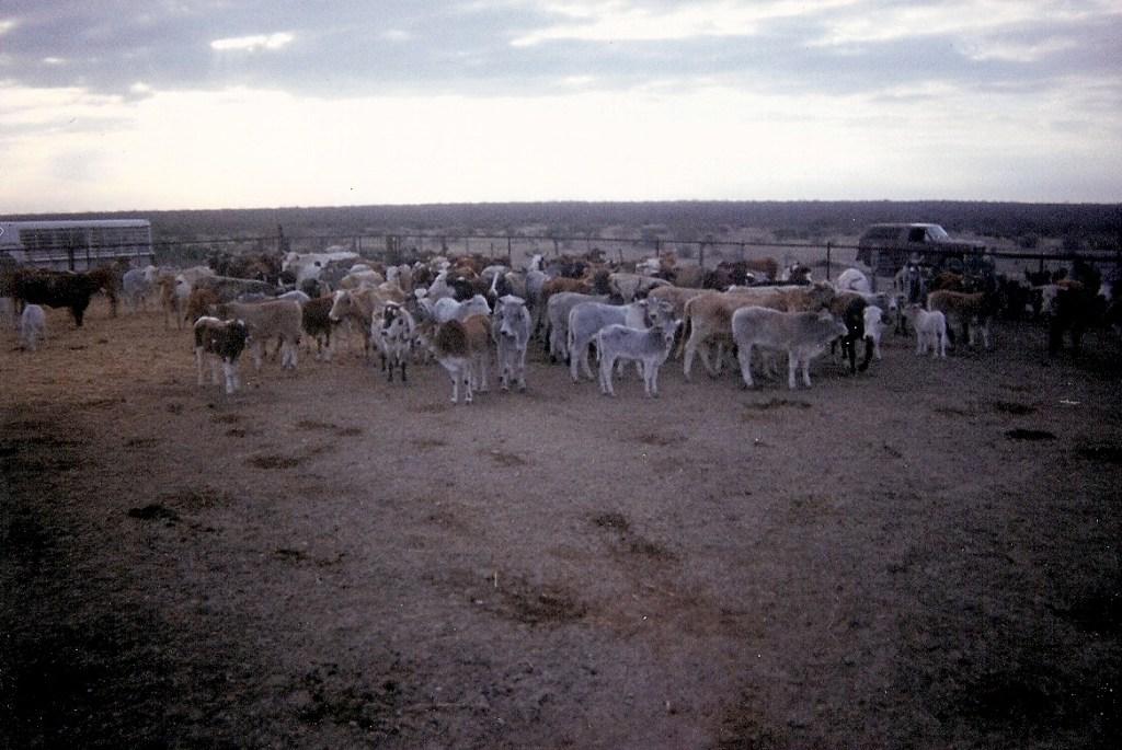 Ranching – 10