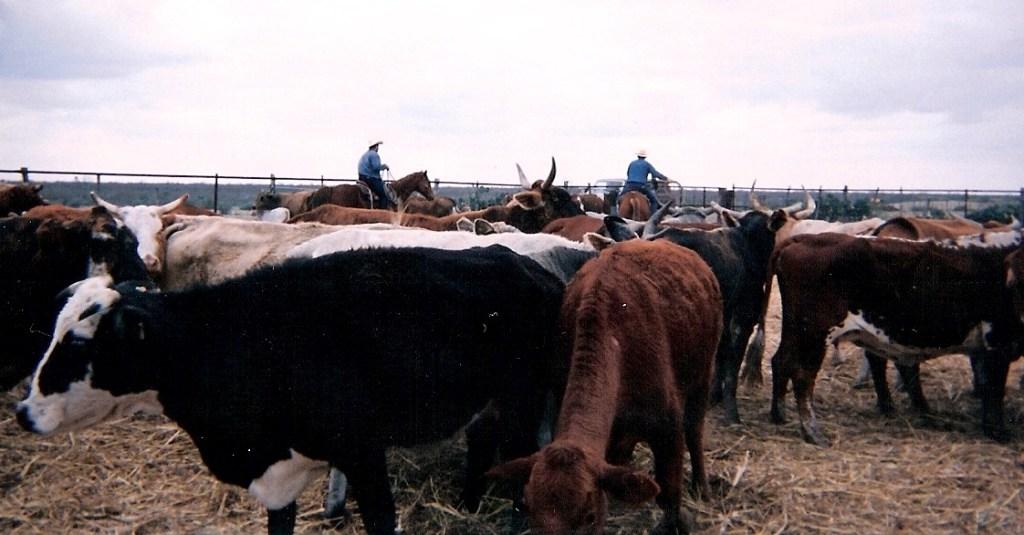 Ranching – 17
