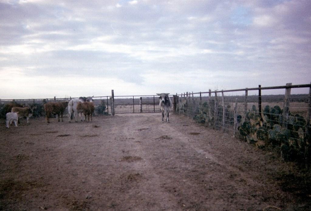 Ranching – 2