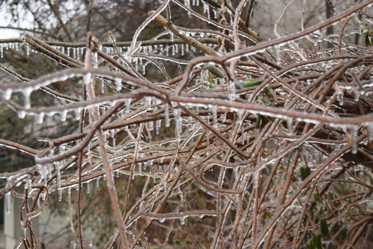 icicles on bushes