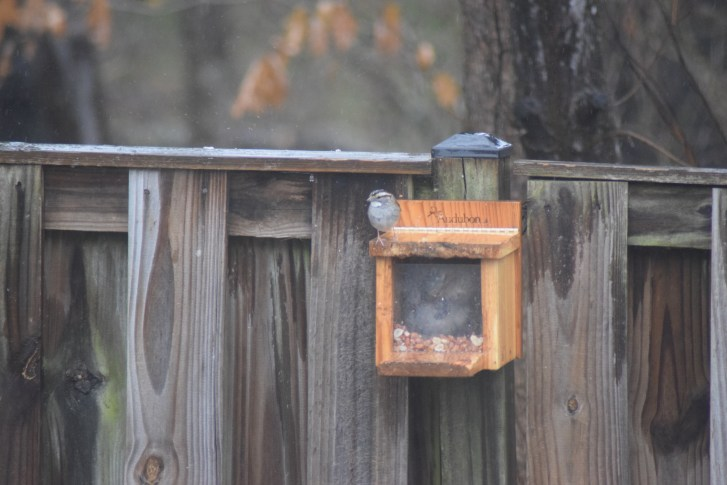squirrel in box eating,  finch perched on lid