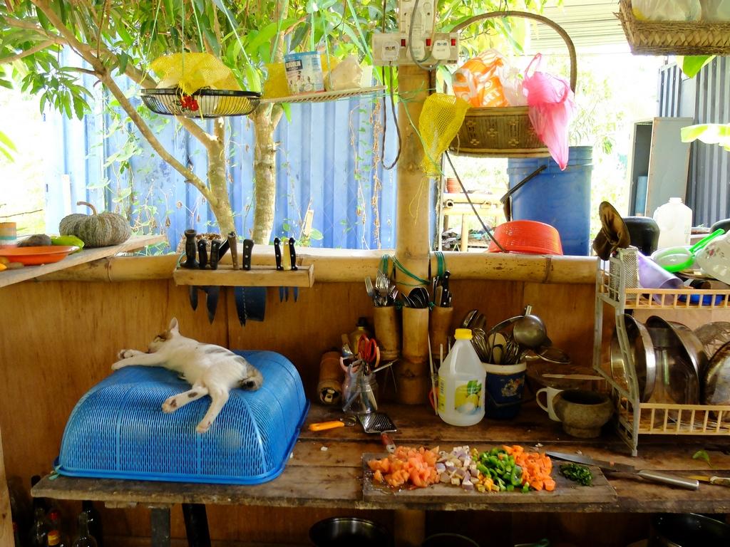 A dziś na lunch... Warzywa z kotem w sobie własnym.