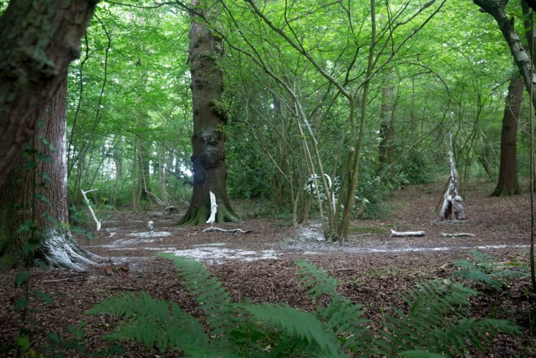 Wide shot of the artwork in the woods