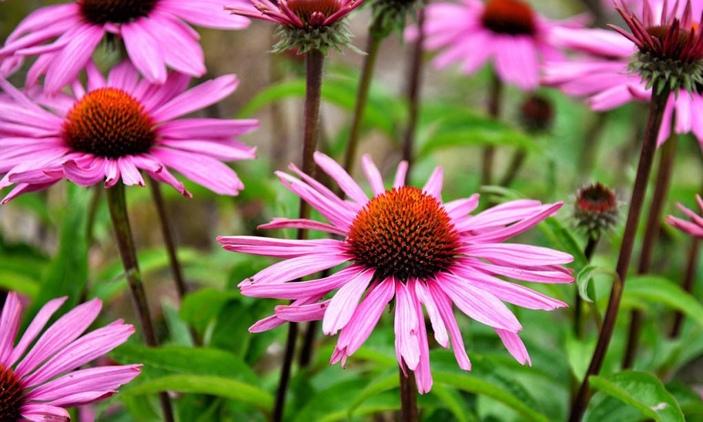 Array of pink flowers