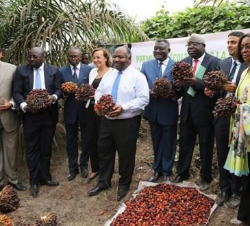 Olam Palm Gabon devient la plus grande entreprise certifiée durable en Afrique
