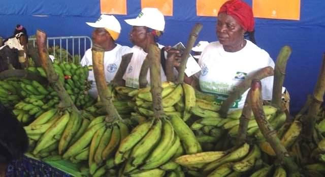 foire agricole de libreville edition 2016 lagriculture pour diversifier leconomie gabonaise - Foire agricole de Libreville, édition 2016 : L'agriculture pour diversifier l'Économie gabonaise.
