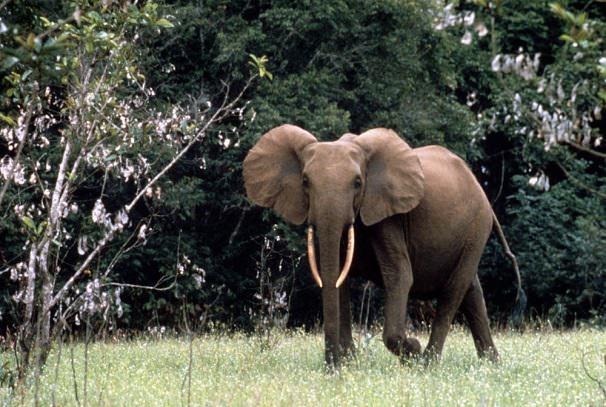 Coexistence homme-faune au Gabon : La Banque mondiale débloque plus de 5 milliards de francs CFA