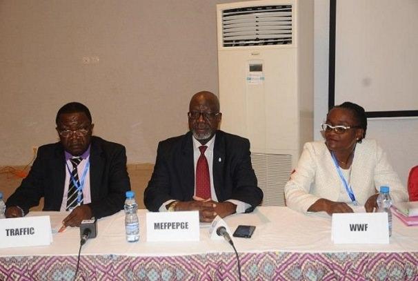 criminalite faunique et floristique au gabon les tic pour juguler le mal - Criminalité faunique et floristique au Gabon : Les TIC pour juguler le mal