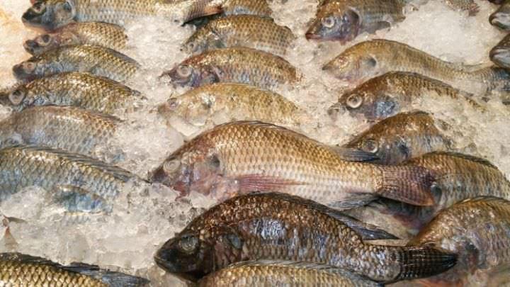 Virus de lac du tilapia : la Côte d'Ivoire interdit l'importation du poisson sur son territoire