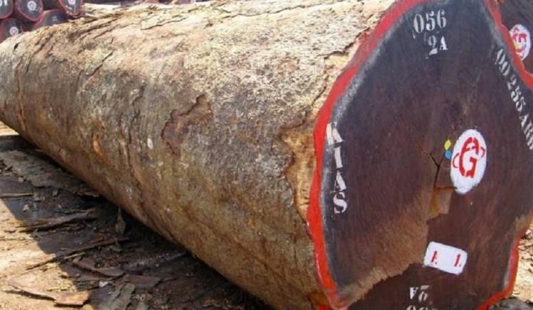 Gabon : Le Kevazingo désormais protégé