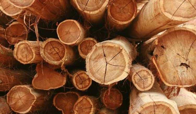 Le bois de Rougier - Bois tropicaux : Rougier vend ses filiales du Cameroun et de la Centrafrique