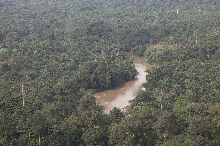 La RDC s'inquiète pour sa forêt
