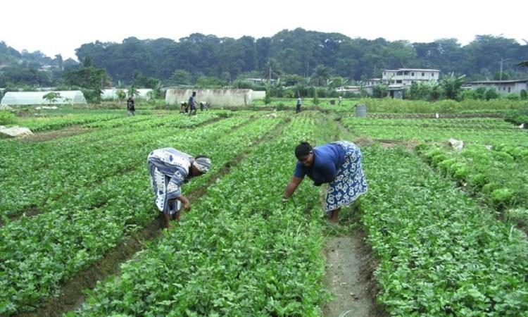 Gabon : Les normes sur la transformation des produits alimentaires vulgarisées