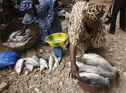 Yélimané : Autonomisation des femmes par la pisciculture