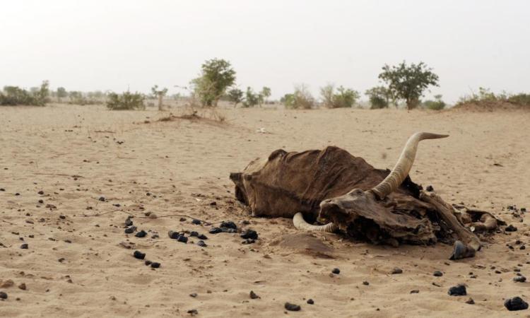 En Angola, des milliers de petits éleveurs menacés par la sécheresse