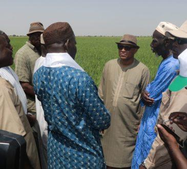 Campagne agricole à l'Office du Niger : Sous de bons auspices dans la zone de Ke-Macina