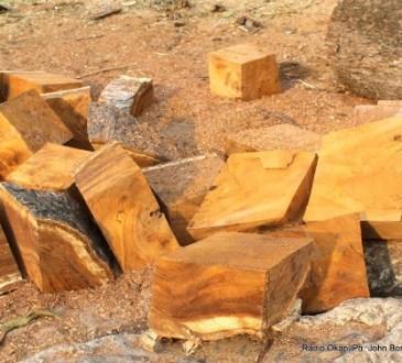 RDC : Lancement du programme de consommation durable et de substitution partielle au bois-énergie