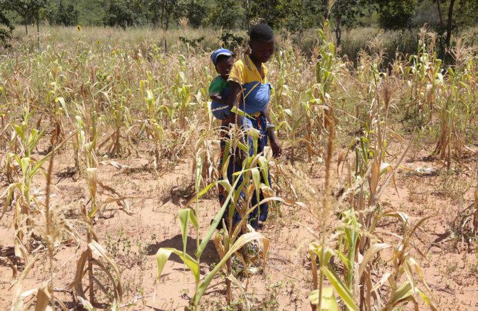 Zimbabwe: appel du PAM pour nourrir un tiers de la population