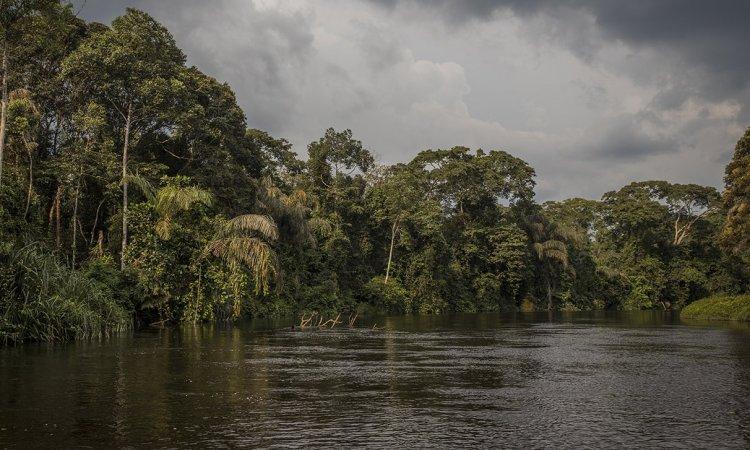 La RDC bientôt condamnée pour avoir tardé à ouvrir la Salonga aux pétroliers?