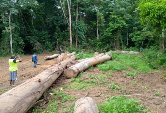 NgounieExploitation forestiereDe nouvelles illegalites et des tensions a Fougamou - Ngounie/Exploitation forestière:De nouvelles illégalités et des tensions à Fougamou