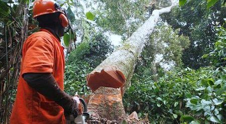 dd98d3 forete du cameroun - Déforestation au Cameroun : Greenpeace interpelle la Deutsche Bank à propos d'Halcyon Agri