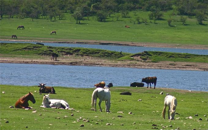 lac_vaches_chevaux