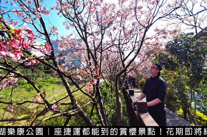 2021東湖櫻花祭交通指南、停車資訊報乎你知!台北賞夜櫻座捷運都能到