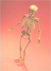 Skeleton - MS