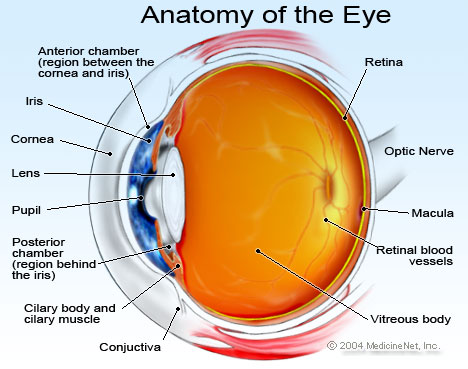 human eye diagram simple ibanez wiring diagrams cataracts. causes, symptoms, treatment cataracts