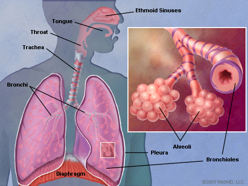 blank heart diagram labeled 3 port motorised valve wiring lungs. causes, symptoms, treatment lungs