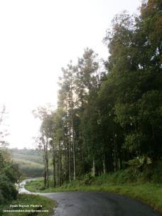 Jalan menuju kebun strobery, Kutabawa Purbalingga