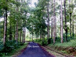hutan-desa-balegede