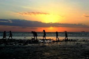 pencari-udang-pantai-lasiana